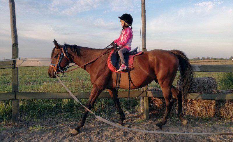 New 500 kilometers-long horseback riding trail connects Western Balkans