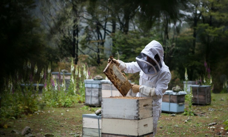 Sweden/USAID FARMA II – BiH is taking the first steps towards cyber beekeeping
