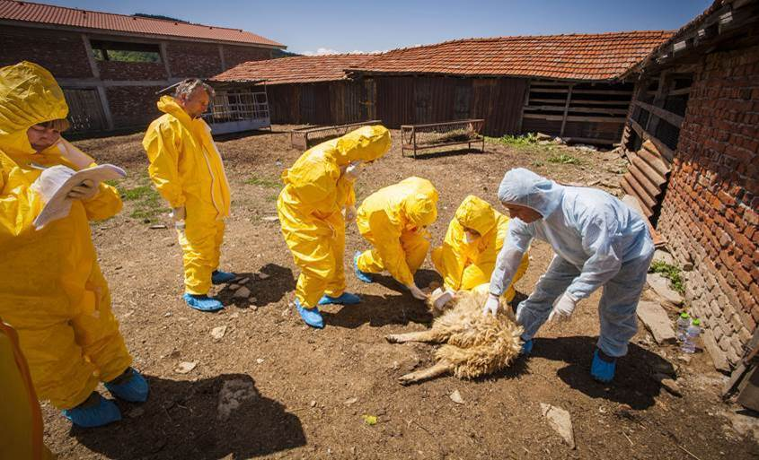 Multi-country simulation  to test animal disease preparedness in the Balkans