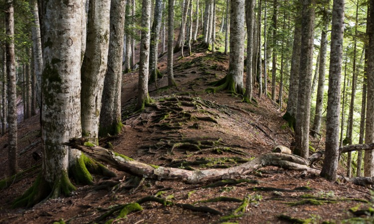 WWF Adria: It is high time we seriously change our attitude towards forests