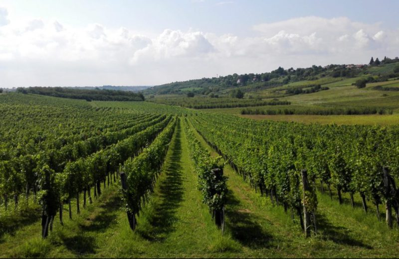 BiH needs to start investing more in the primary agricultural production
