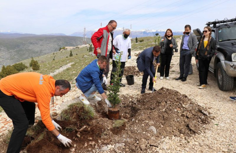 The first ten out of a total of 1,000 young trees planted today at Fortica Hill near Mostar