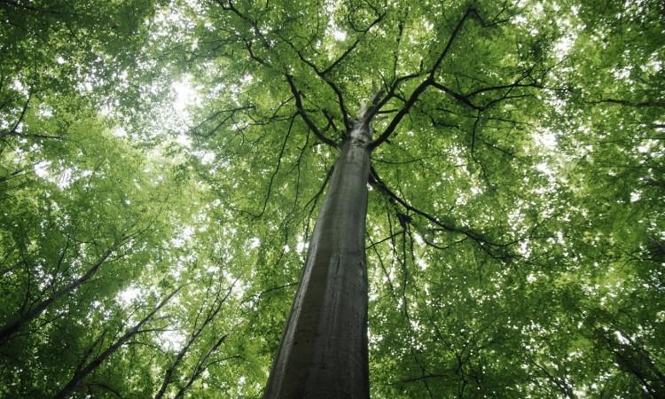 UNESCO declares Janj rainforest near Šipovo among most valuable natural assets