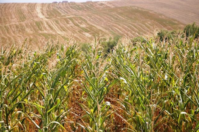 Usorac: Damages to agricultural crops in BiH range from 50 to 70 percent